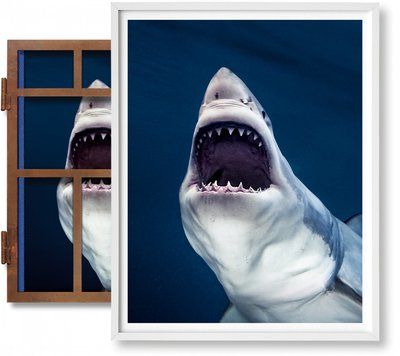 【Art Edition】Michael Muller. Sharks(No. 1-100) ,迈克尔·穆勒:鲨鱼(1-100)